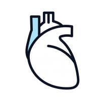 Drawn outline of a heart with one artery colored blue